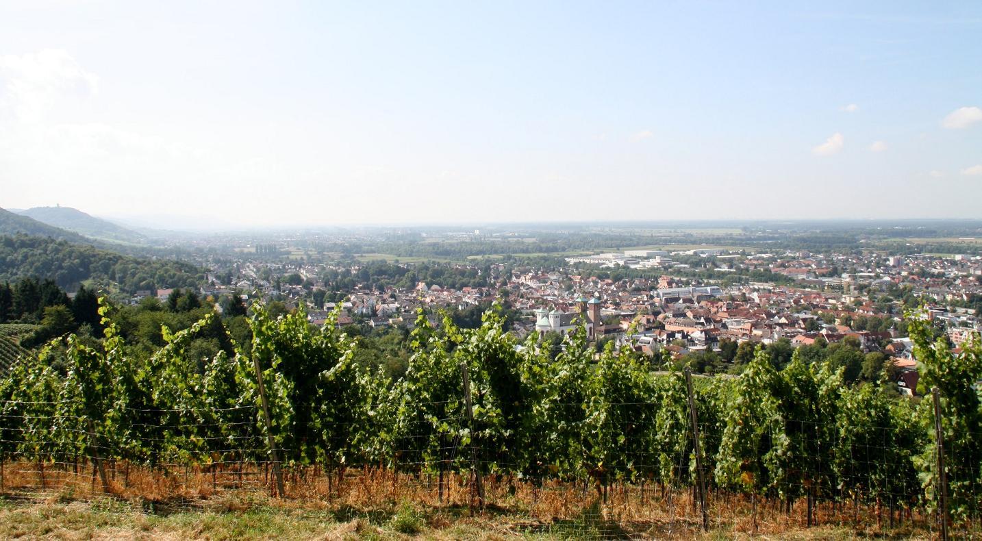 Bild von Weinberg in Bensheim